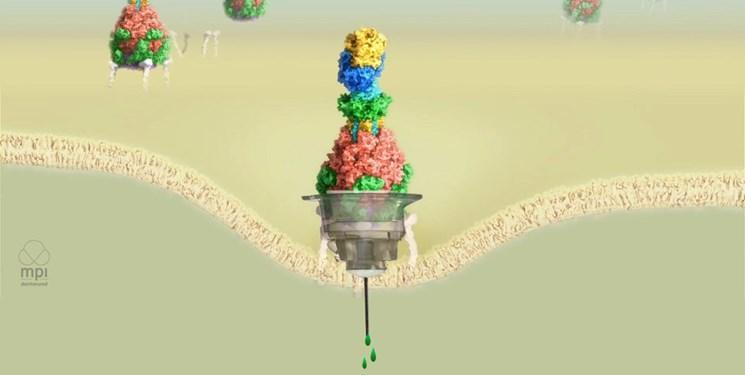 دستکاری باکتری ها برای تزریق دارو به جای سم