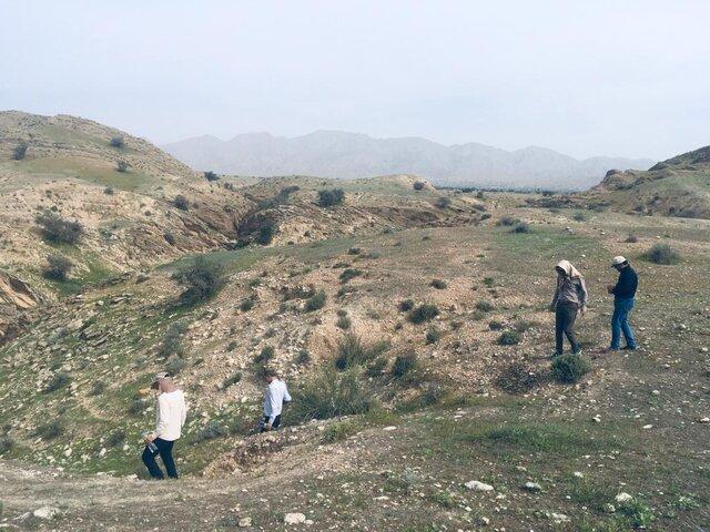 تایید وجود دسته های ملخ مهاجم در قیروکارزین فارس